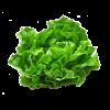 Lettuce Pkt